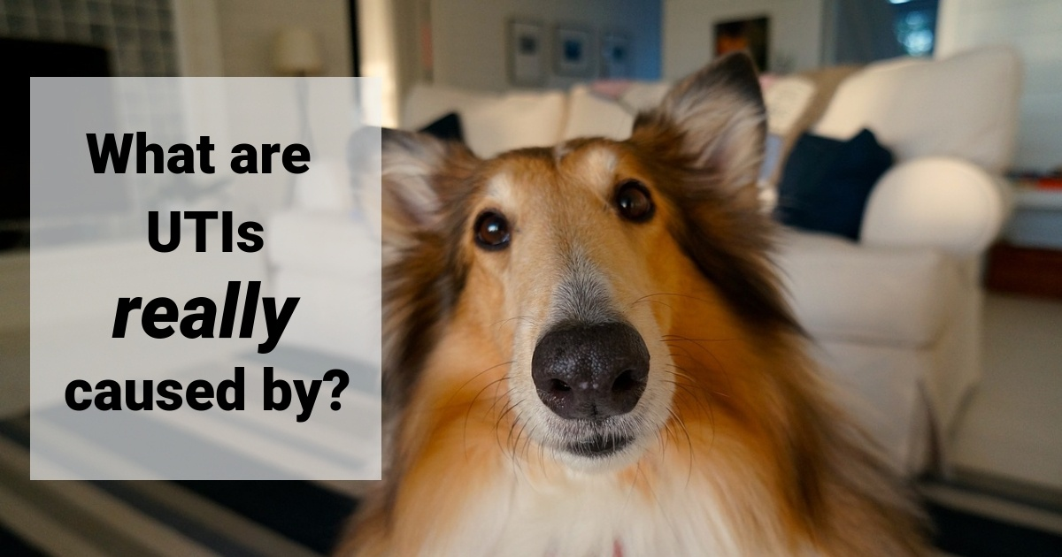 what_are_utis_caused_by_myths_dog